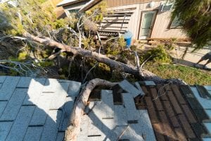 fallen tree major causes of roof damage