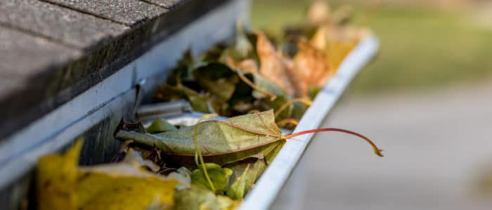 A roof's gutters are filled with fallen leaves.